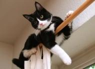 Как да направите дома си безопасен за своята котка?