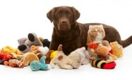 Обучение на кучето: Урок №22. Научете кучето да носи предмети