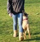 Обучение на кучето: Урок №24. Научете кучето да върви с Вас