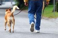 Съвети как да водите кучето си на каишка