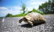 Как да постъпим, ако видим костенурка на пътя?