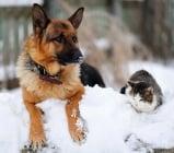Как да предпазим домашните любимци през зимата?