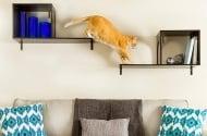 Как да предпазим котката от нараняване?