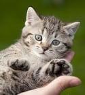 Как трябва да държим котката?