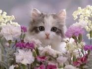 Какво да очакваме от котката, когато е на възраст от 1 до 3 месеца?