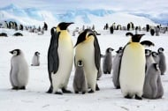 Уникално: Как животните се топлят през зимата?