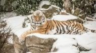 Какво правят животните в зоопарка, когато времето стане много студено?