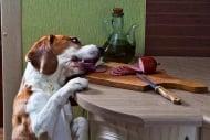 Какво правят кучетата, когато са сами?