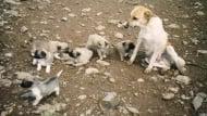Започва акция по кастриране на безстопанствени кучета