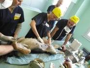 Кастрация и стерилизация при кучето