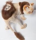 Невероятна изложба на котешки прически