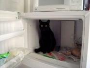 Котки, избиращи най - странните места за почивка и сън