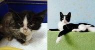 Котки преди и след приюта, или на какво е способна любовта?