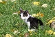 Разтърсващата история на Краси - котето с несломим дух, което чака своето семейство