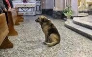 Куче ходи на църква всеки ден в очакване на починалия си стопанин