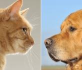 Разлика между хората, обичащи кучета и котки