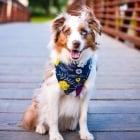 С кучето си сте на гости за празниците?! Какво трябва да имате предвид?