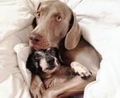 Куче с разбито сърце от загубата на приятеля си получава изненада