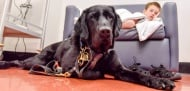 Куче се грижи за своя 9-годишен стопанин, който е аутист
