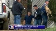 130 кучета бяха изведени от приют за животни - директора е обвинен в жестокост