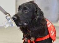 Кучета откриват заболяването Рак  в проби от урина