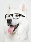 Кучетата могат да разпознават образите на други кучета