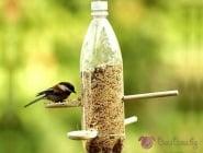 Ето как да направим различни видове хранилки за птици в домашни условия