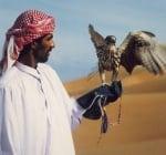Ловът със соколи - атракция за богаташите в Саудитска Арабия