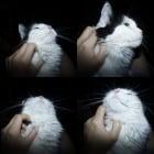Кои са любимите места на котката за галене?