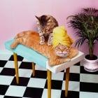 Защо котките обичат да ни
