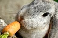 Морковите – вредни за зайците