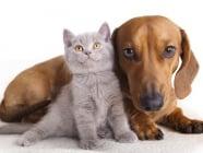 Сигурни начини за предпазване на домашните любимци и хората от бълхи