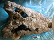 Открити са останки на най - големият крокодил намиран досега
