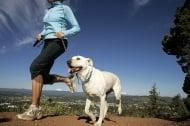 Най - подходящите породи кучета за хора, които обичат да тичат