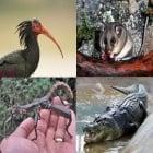 10 от най - редките животни на Земята