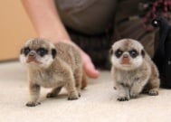 Най - сладките бебета, родени в зоопарк през 2016