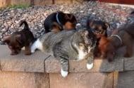 Най - търпеливата котка на света (видео)