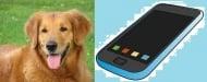 Българи работят за създаването на мобилно приложение за намиране на животни