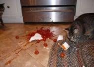 Незабравимите пакости, които вършат нашите кучета и котки