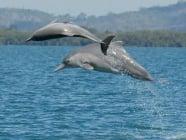 Нов вид делфини бяха открити край бреговете на Австралия
