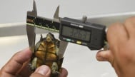 Нов вид костенурка бе открит в Мексико