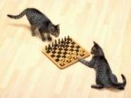 Общуване при котките