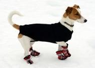 Обучете кученцето да ходи до тоалетна през зимата чрез 6 трика