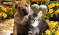 26 продукта, които са опасни за котките и кучетата