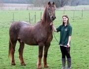 Почина най - старият кон в света, достигнал 120 човешки години