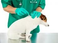 Полезна информация за накапващите продукти срещу външни паразити