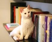 Помнят ли котките?