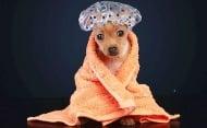 Премахнете неприятната миризма на кучешката козина с натурален оцет