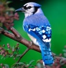 Съвременните птици са преки наследници на динозаврите