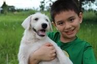 9-годишно момче създава приют за животни